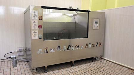 War level magneted oxygen microbubble bath underwater treadmill-Taoyuan dataipeivet Animal Hospital