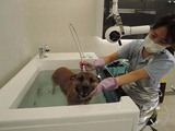 Top Pet SPA magnetization microbubble bath-Hongkong Sai Ying Pun
