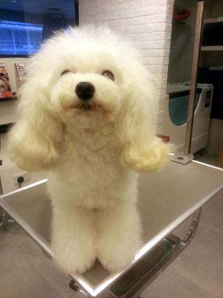 Top Pet SPA magnetization microbubble bath-Hennessy Road, Tongluowan, Hongkong